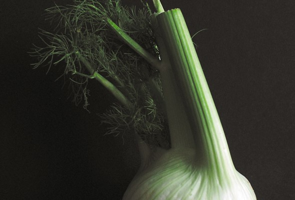 Fenchel - die tolle Knolle